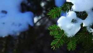 Tannenzweig und Schnee