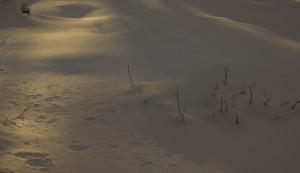 Schnee im Abendlicht